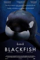 P�ster de Blackfish (Blackfish)