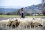 Foto de Las ovejas no pierden el tren (Las ovejas no pierden el tren)