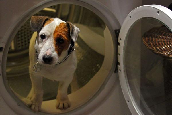Este es nuestro cine: Pelicula de Pancho,el perro de la loteria 26693
