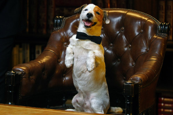 Este es nuestro cine: Pelicula de Pancho,el perro de la loteria 26696