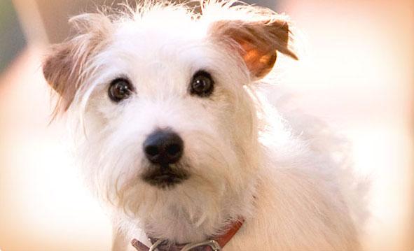 Imagen de Hotel para perros (Hotel for Dogs)