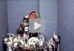 Tr�ilers y v�deos en espa�ol de 102 d�lmatas (102 Dalmatians)